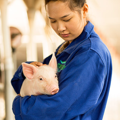 AgExplorer: STEM Careers Improving Animal Health